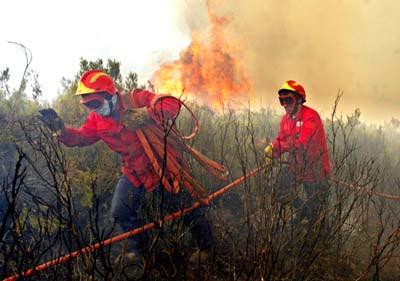 Tudo sobre bombeiros:paramédicos,acidentes,imagens